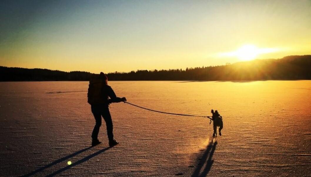 Selv om isen er trygg på store deler av vannet, kan det være områder med dårlig is. Obligatorisk sikkerhetsutstyr er ispigger, kasteline og fløyte. Gå aldri alene, og lytt til lokalkjente skøyteløpere. Bruk ulltøy innerst, fordi ull isolerer selv om det blir vått.  (Foto: Øystein Wiggen)