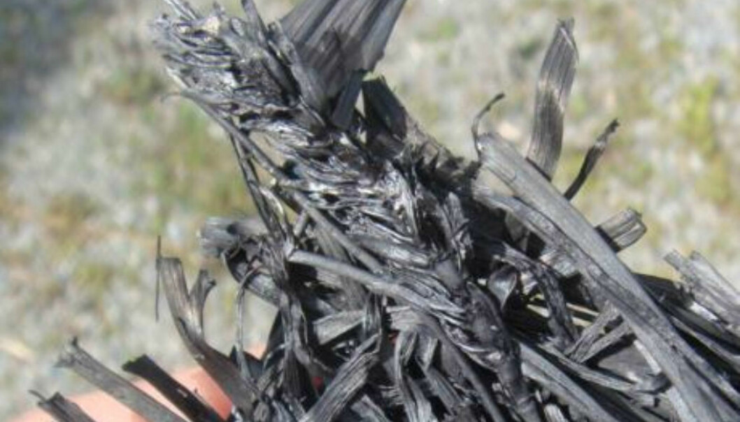 Biochar is highly efficient for carbon storage in soil. Recent research also indicates that the material can reduce plants' uptake of heavy metals from contaminated soil. (Photo: Bioforsk)