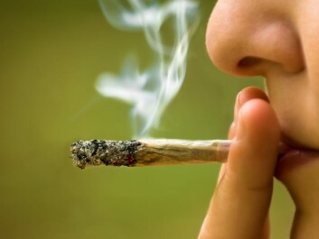Cannabis is the most commonly used illegal drug in Norway. (Photo: Ststoev/Microstock)