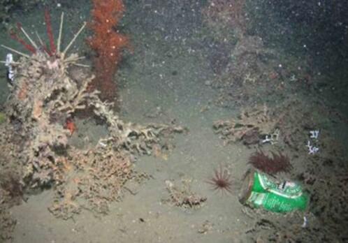 Rubbish found in the deepest ocean depths