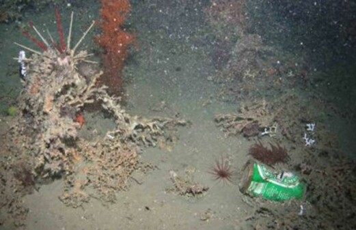 Rubbish found in the deepest ocean depths