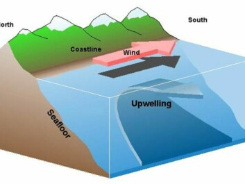 Upwelling: The diagram illustrates colder, denser and nutrient-rich deep water rising and replacing the surface water (Illustration: Wikipedia)