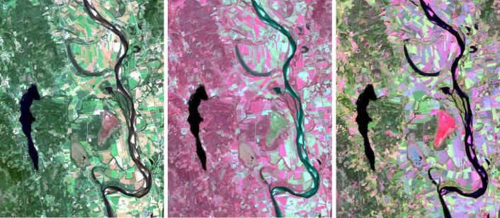 Forskerne kan kombinere bilder fra flere frekvensbånd for å se forskjellene i vegetasjon tydeligere. Her er et område nær Flisa ved Glomma skannet i synlig lys (venstre) og i infrarødt lys (midten). Til høyre er de to bildene kombinert. Det brune området nedenfor midten av bildet er et torvuttak. (Foto: Sentinel-2A, ESA/Andreas Kääb, Universitetet i Oslo)