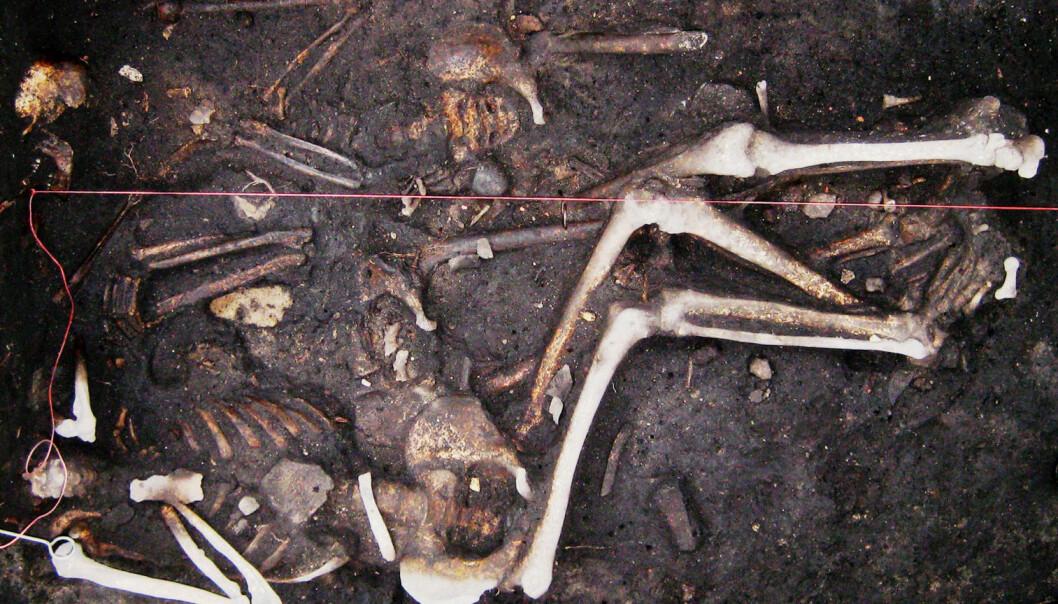 Noen av prøvene ble tatt fra denne tyske trippelgraven med restene etter tre soldater, datert til trettiårskrigen (1618-1648).  (Foto: Seifert m.fl.)
