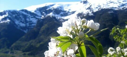 Climate change could lead to more Norwegian fruit
