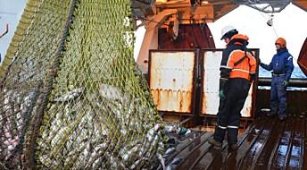 Vil bedøve torsken før avliving