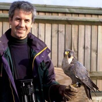 Forsker Christian Kierulf Aas ved Naturhistorisk museum er ekspert på effektiv skremming av fugler og bistår flyplasser. Her med en levende vandrefalk ved flystasjonen RAF Mildenhall i England.  (Foto: privat)