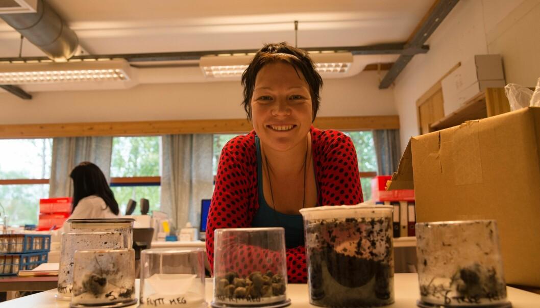 Laboratorieleder Siv Grethe Aarnes med et utvalg bjørnemøkk og «luremøkk» fra andre dyr. (Foto: Anette Tjomsland)