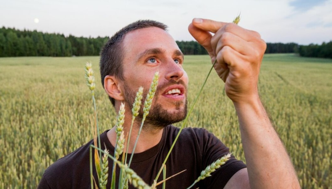 """In developing countries our research results can lead to the ability to develop wheat varieties that are specially adapted to different climates. The way forward is to actively exploit the genetic information in the breeding process,"" says Simen Rød Sandve, one the researchers in the project. (Photo: Håkon Sparre, NMBU)"