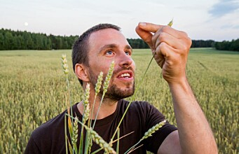 A major step towards better wheat
