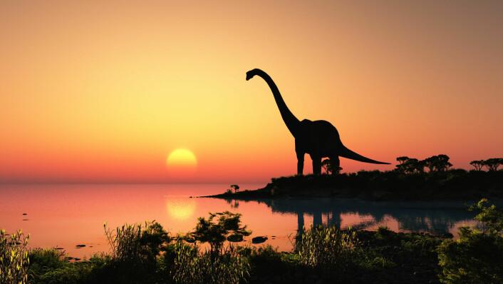 Er det flere eller færre arter nå, enn for eksempel da dinosaurene levde? (Foto: Shutterstock)