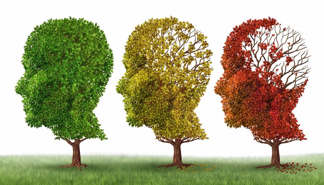 Når et menneske har for lite BDNF er dette forbundet med både ulike typer læreproblemer, svekket hukommelse, og i verste fall Alzheimers sykdom og Huntingtons sykdom. For mye BDNF derimot, kan muligens forårsake autisme.  (Illustrasjon: Shutterstock, Scanpix)