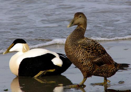 Tourists cause seabirds to abandon nests