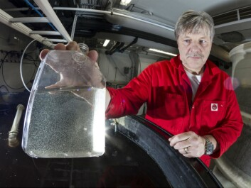 The test-tube contains copepods, which senior scientist Jan Ove Evjemo and his colleagues cultivate as feed for various fish and crustacean species. The cultivation technology is the key factor for raising well-developed tuna fry. (Photo: SINTEF/Thor Nielsen)