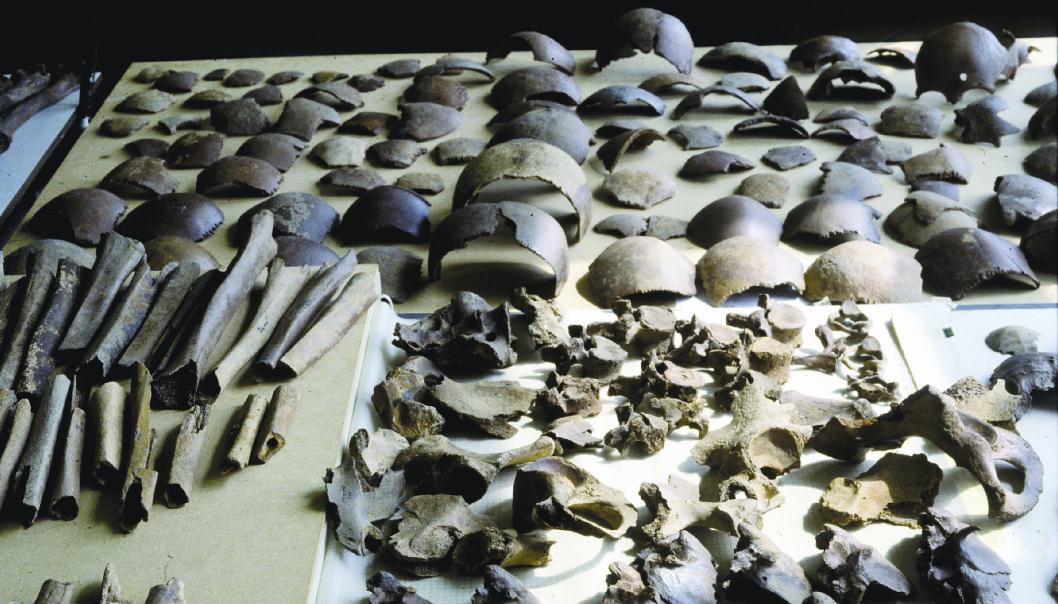 Disse knoklene ble funnet i Kessel, og disse stakkars germanerne kan ha vært ofre for en massakre beordret av Julius Cæsar selv. (Foto: Vrije Universiteit Amsterdam)