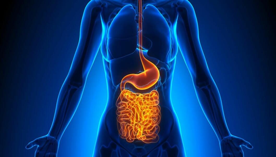 Det er på moten å forske på de bakteriene som holder til i tarmene våre, og i de siste årene har flere og flere studier pekt på at de har betydning for en rekke sykdommer. Dansk forsker mener at tarmbakterieforskere bør tenke seg om en ekstra gang.  (Illustrasjonsfoto: Shutterstock)
