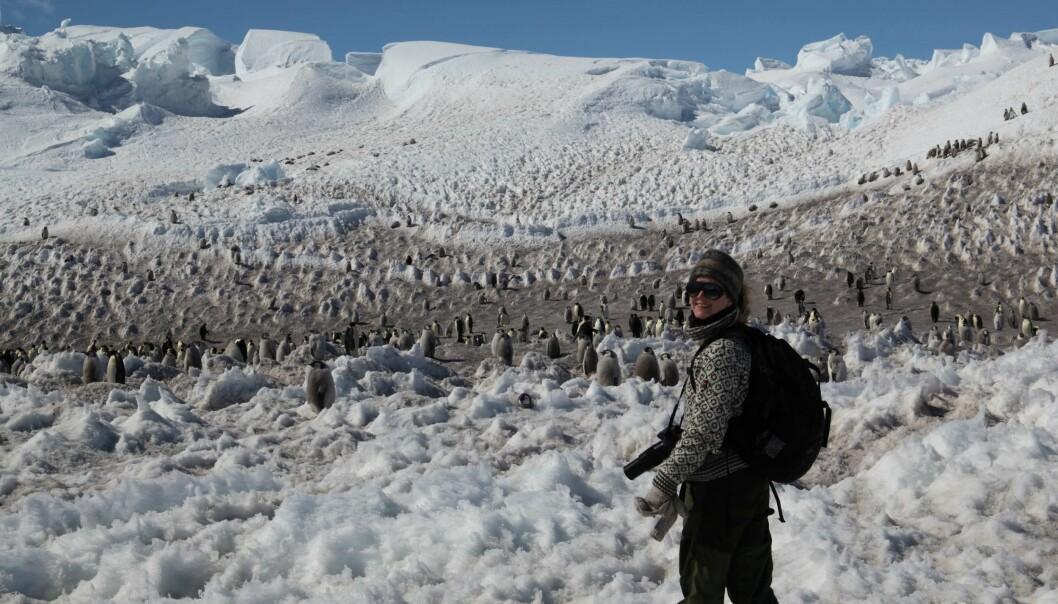 Jul med Pingu og andre pingviner. Norith Eckbo forsker seg gjennom julen i Antarktis. (Foto: Claire Davies)