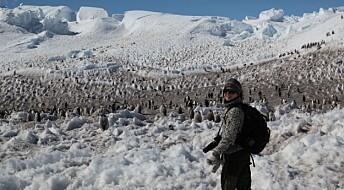 Skal feire jul blant pingvinene