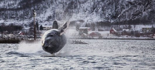 Den flygende hvalen, og ni andre historier