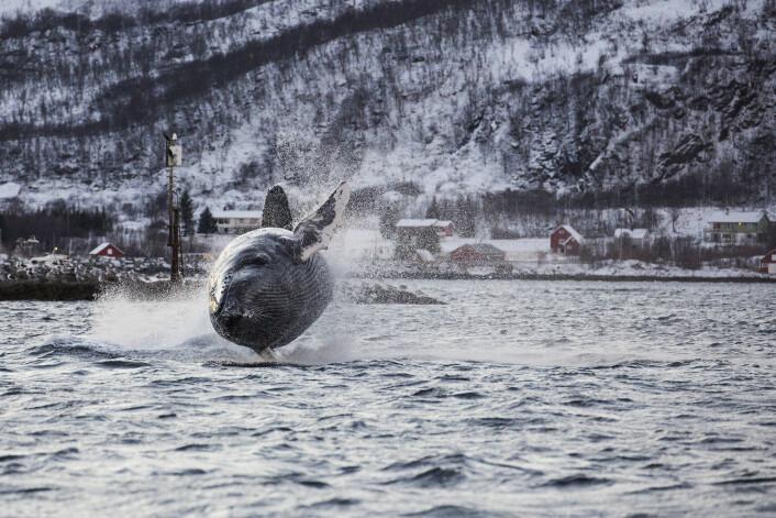 (Foto: Karl-Otto Jacobsen)