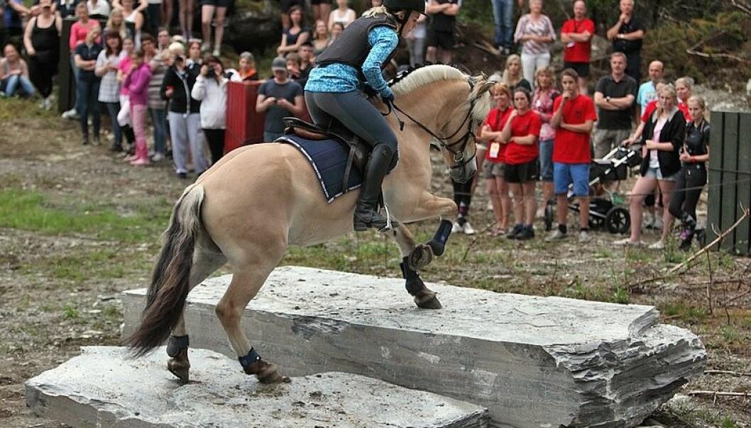 Den gamle styrkeprøven Skeid er igjen tatt i bruk på fjordhest-stevner. En historisk kappestrid hvor hestene får vist det de er gode på, i hodet og i terrenget. (Foto: Svein Ulvund)