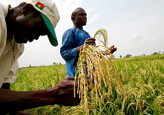 Predicting future food crises