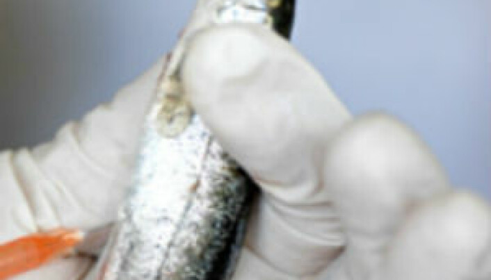 Human vaccines to aid farmed fish