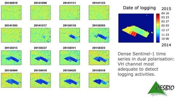 Hyppige passeringer med bilderadar fra Sentinel-1A gjør det mulig å påvise hvor og når det hugges i regnskogen. (Bilde: ESA/CESBIO/Copernicus Sentinel data 2015).