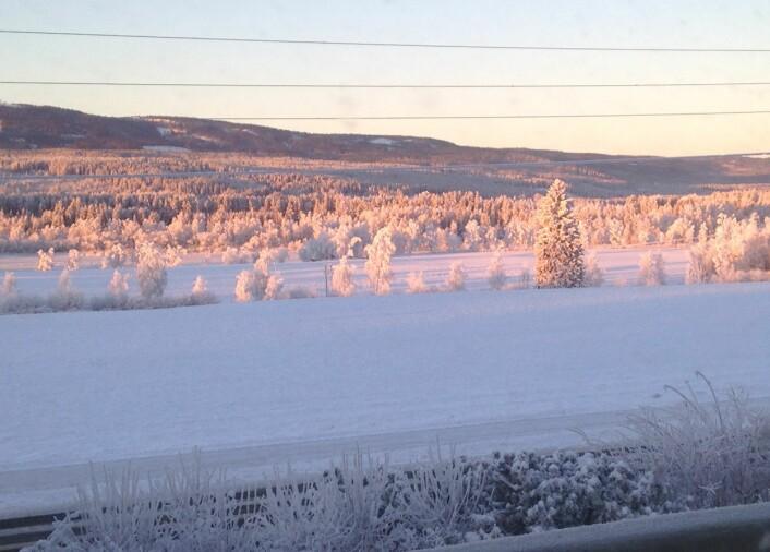 Snø, gran og lys. Er dette den ultimate jule-naturtypen, den med størst sannsynlighet for å gi julestemning? Foto: HAU