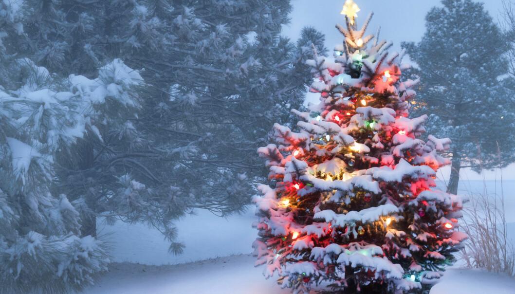 Fant julestemning i hjernen
