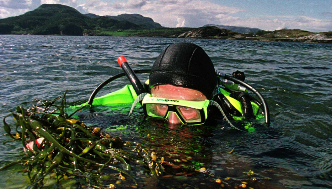 Kelp can be turned into a kind of