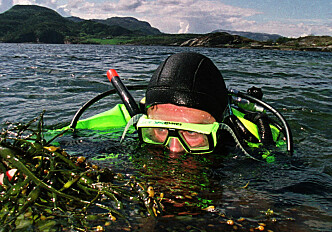 Turning seaweed to biofuel