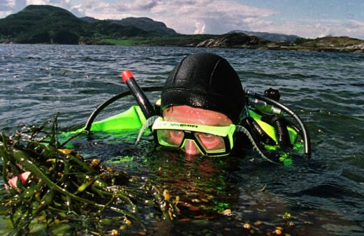 Turning seaweed to biofuel