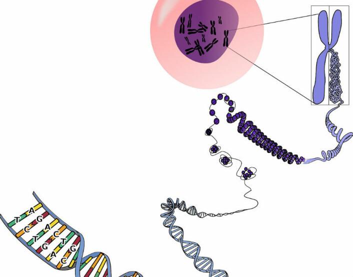 Et stadig økende antall forskere arbeider for å forstå hvordan akkurat mikroRNA bidrar til sykdom. Dette har hittil ført til mer enn 40 000 publikasjoner om mikroRNA. Blant disse utallige publikasjoner ble svært lovende resultater på bestemte mikroRNAer rapportert, og deres rolle i noen typer kreft.  (Foto: Pixabay)