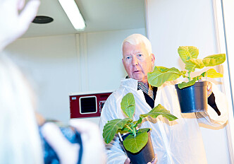 From genetically modified tobacco plants to medicine for Ebola