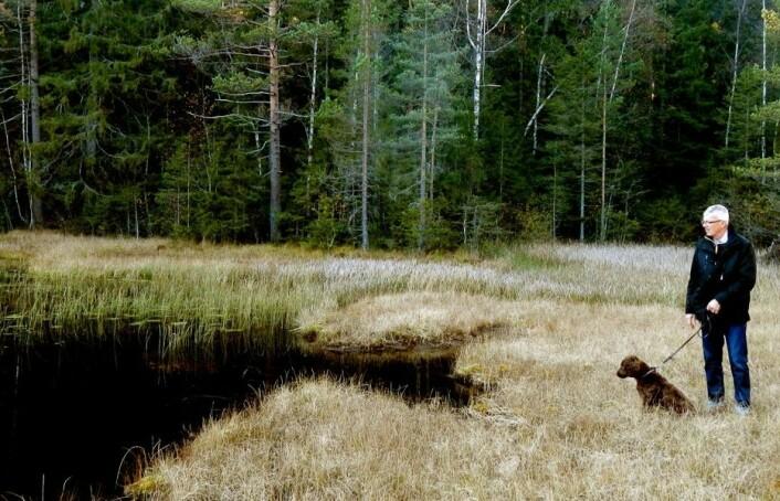 Tilsynelatende øde dammer, tjern og vannansamlinger er rikere enn vi hittil har visst om. Fjerdingbydammen i Rælingen kommune har «Norgesrekord» i harpacticoide hoppekreps, med seks arter i en enkelt moseprøve. (Foto: Thomas Correll Jensen, NINA)