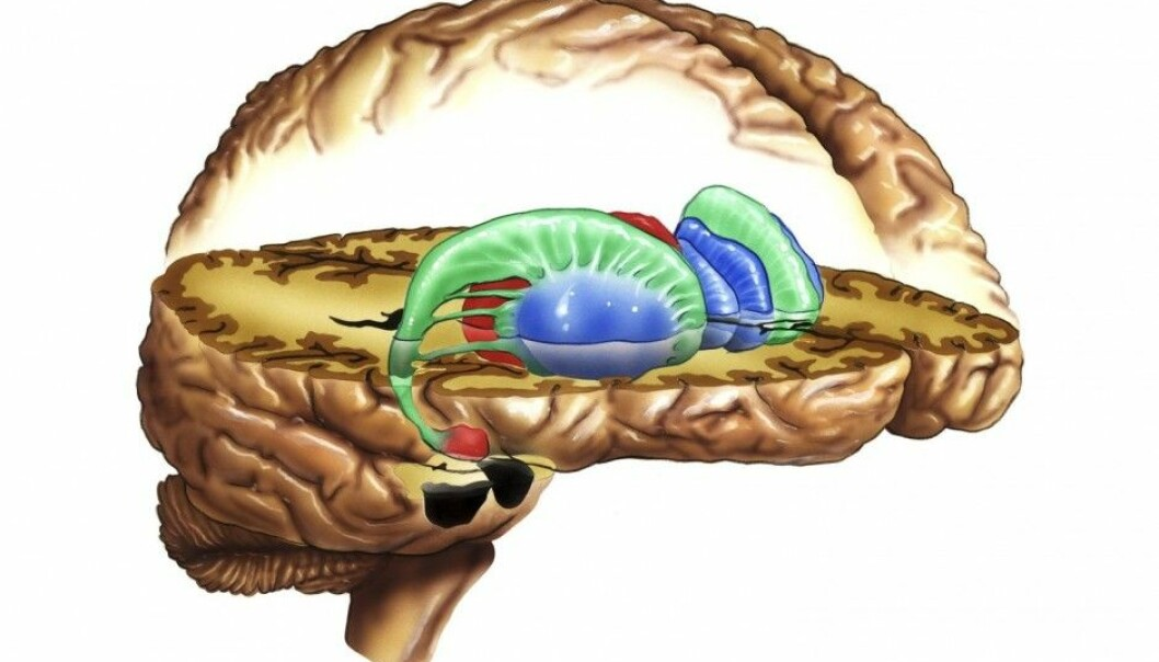 """The researchers looked at the striatum, the """"reward centre"""" of the brain. By measuring our reaction to questions related to fairness, equality, work and money, this part of the brain may hold some answers to the issue of how we perceive distribution of income. (Photo: Science Photo Library)"""