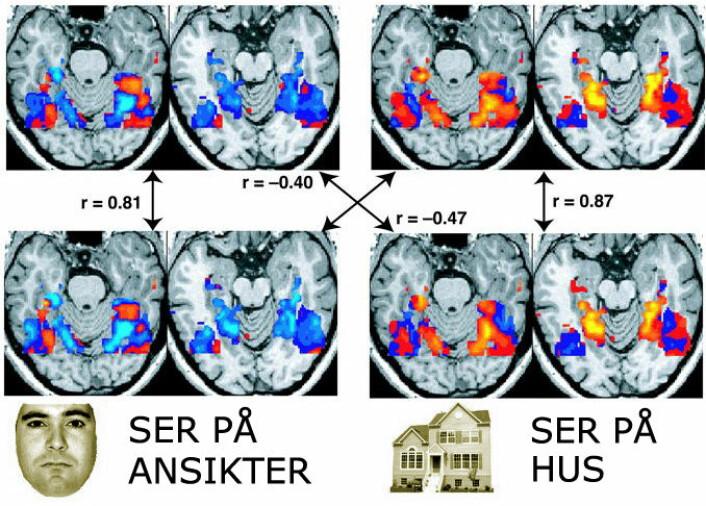 Hjernen tenner på inntrykk: Disse hjerneskannene viser hvor hjernen er aktiv når forsøkspersonen ser på hus og ansikt. (Foto: (Bilde: National Institute of Mental Health, bearbeidet av forskning.no))