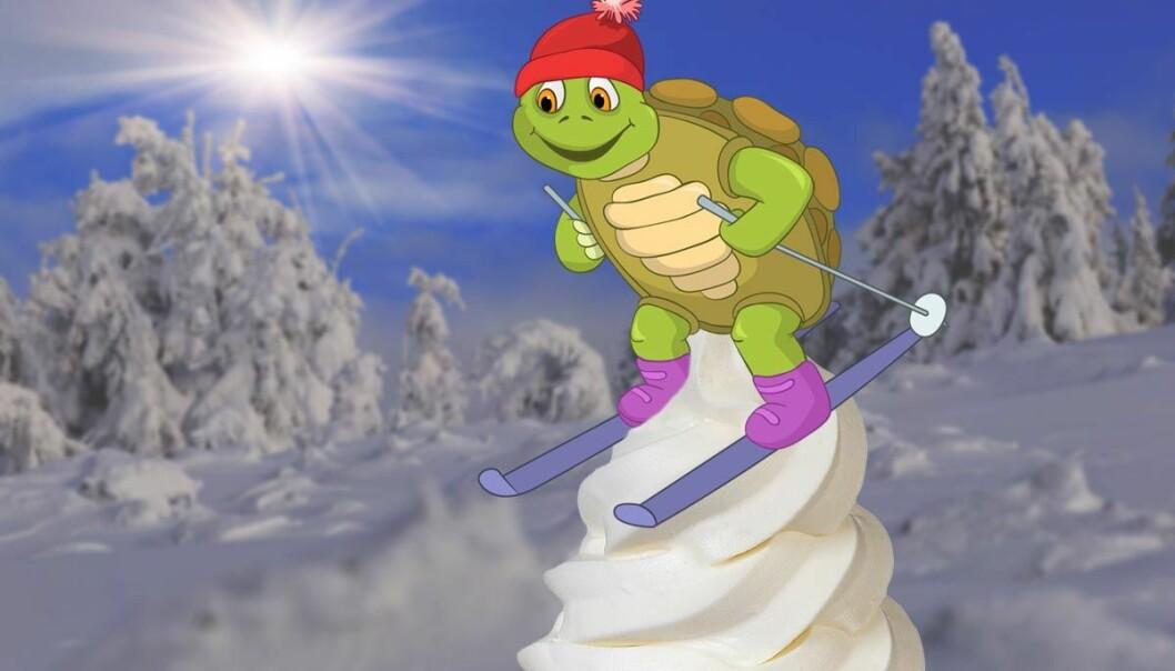 Når ski glir langsomt framover, dannes myk is under skien, viser beregninger gjort av den tyske forskeren Bo Persson. Fenomenet skyldes en uendelig sløyfe av smelting og frysing som gjensidig motvirker hverandre. (Illustrasjon: www.colourbox.no, bearbeidet av forskning.no)