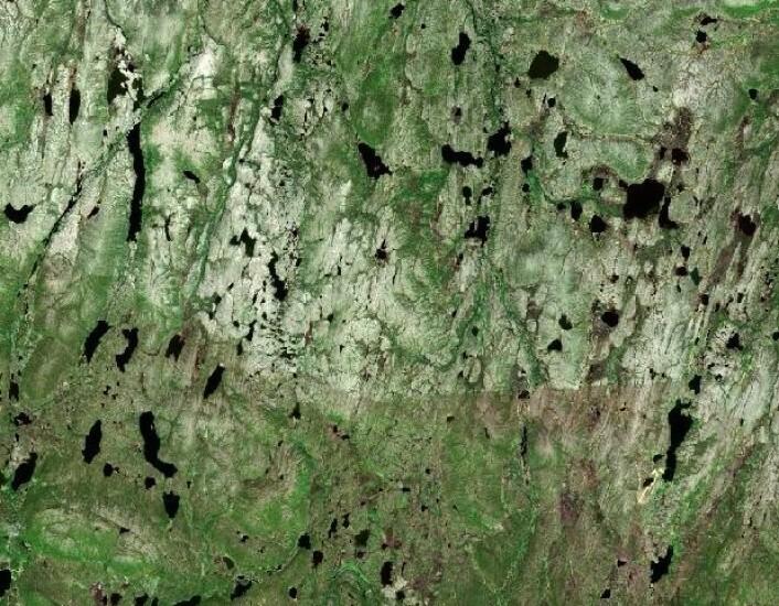 Hmmm, hvor i Norge ser landskapet slik ut? (Copernicus Sentinel data (2015). Prosessering: Institutt for geofag/UiO)