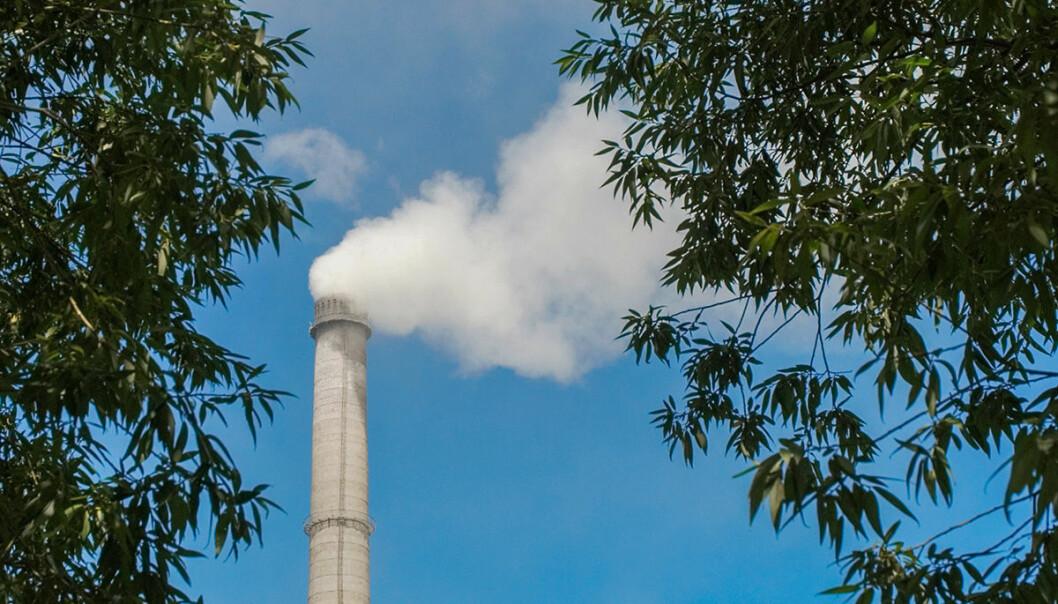 Planter suger opp rundt en tredjedel av menneskeskapt CO2. Svenske forskere har analysert over hundre år gamle døde planter og funnet ut at CO2-opptaket i plantene har økt. Nå kan opptaket være på vei ned igjen. (Foto: www.colourbox.no)