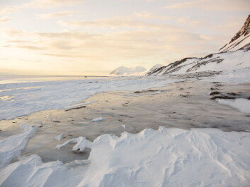 An unusually thick cover of ice, averaging 15.3 cm, covered areas of the Svalbard archipelago after a very rare rainstorm in January. (Photo: Brage Bremset Hansen)