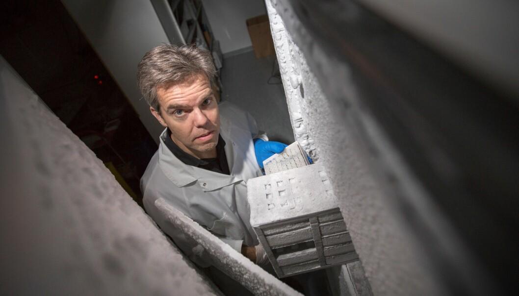 Magnus Essand henter fram de genmodifiserte forkjølelsesvirusene som sannsynligvis snart skal testes ut på pasienter med nevroendokrin kreft. (Foto: Mikael Wallerstedt)