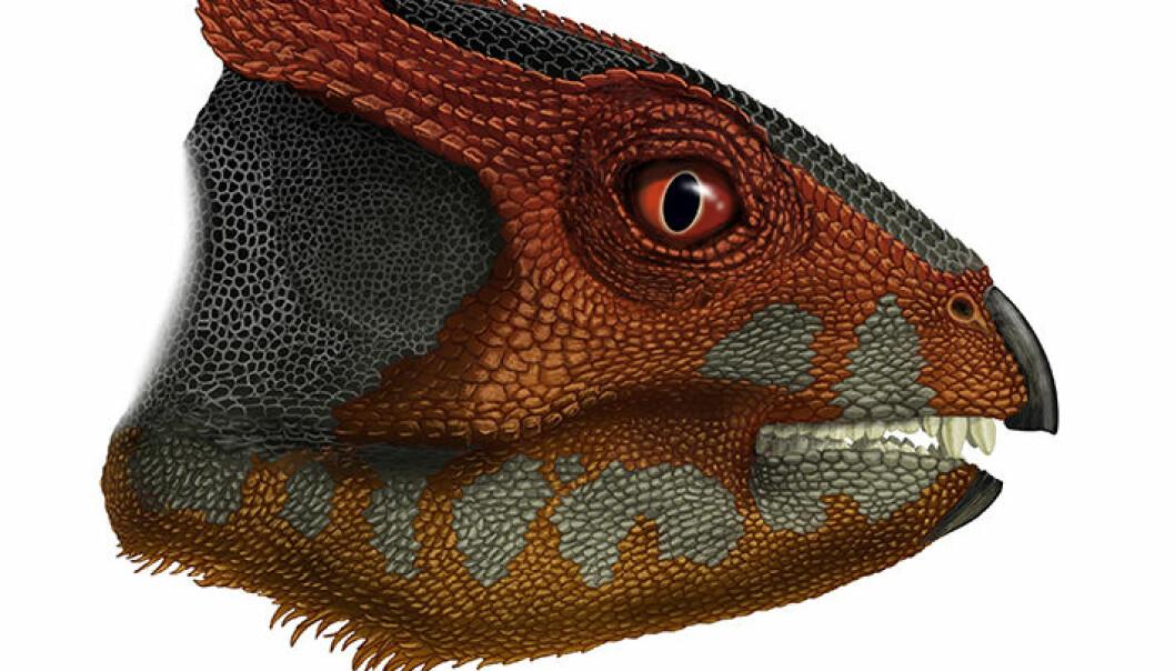 SLik kan Hualianceratops wucaiwanensi ha sett ut. Dinosauren gikk på to bein og var på størrelse med en spaniel.  (Illustrasjonsbilde: Portia Sloan Rollings.)