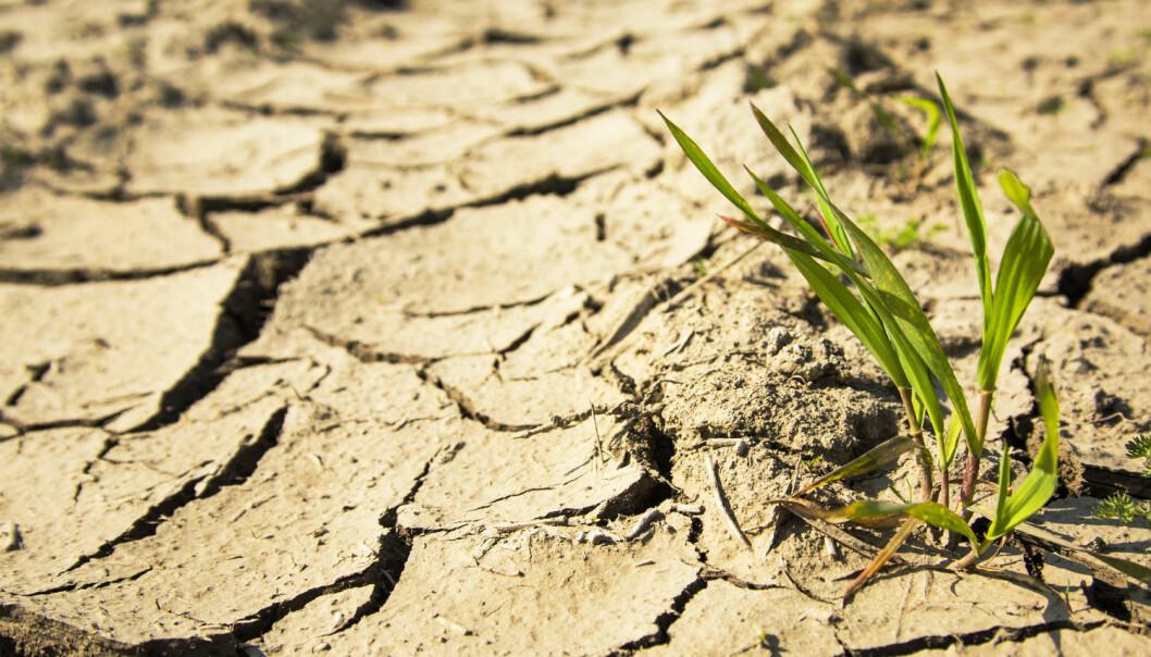 Tørken rammet et område som allerede var sårbart. Det ble umulig for bøndene å dyrke noe.  (Illustrasjonsfoto: Shutterstock)