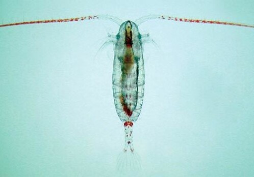 An acidic ocean may mean less fish