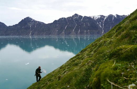 Flies and mosquitoes dominate the Svalbard archipelago