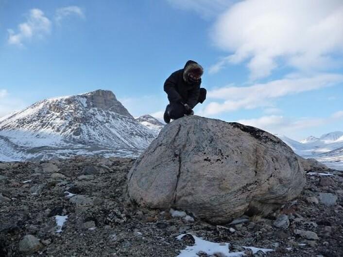 I Naqsaq Valley på Baffinøya ligger denne steinen, skjøvet fram i endemorenen til en isbre samtidig med at vikingene bosatte seg på Grønland rundt år 1000. Her undersøker geolog Jason Briner fra University at Buffalo steinen. (Foto: Nicolás Young)