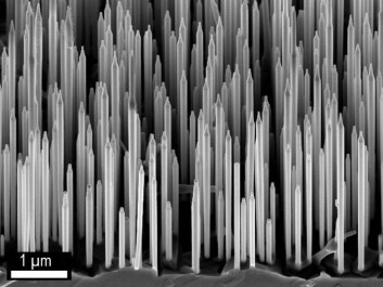 Electron microscopy photo of wurzite GaAs/AlGaAs nanowires. (Dheeraj Dasa and Helge Weman, NTNU).