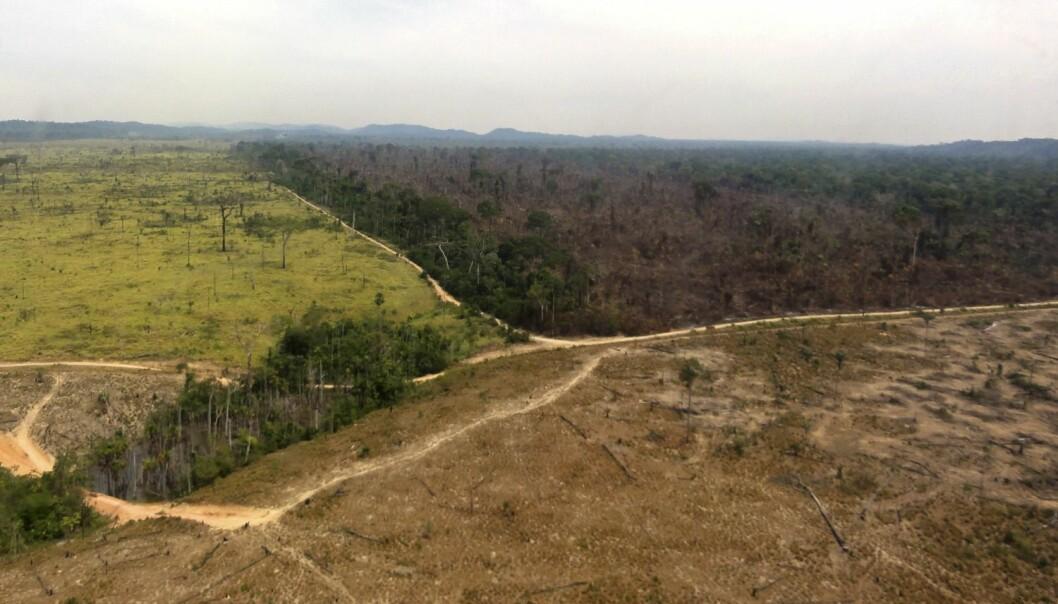 Verdens regnskoger blir ryddet med rasende fart. Det truer nå over halvparten av alle treslagene. (Foto: Reuters)
